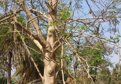 What drove an Adivasi woman in Chhattisgarh to suicide?