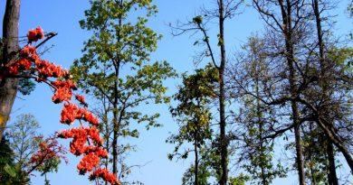 पेड़ -लताओं के हुल