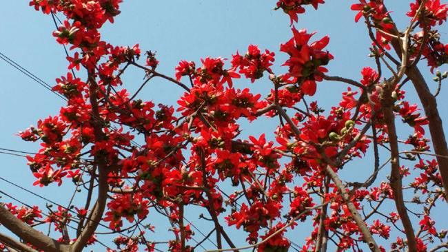 """भारतीय मूल का प्राकृतिक नववर्ष """"पूनल सावरी"""": डॉ सूर्या बाली """"सूरज धुर्वे"""""""