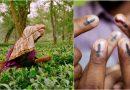 लोकसभा चुनाव में डुवार्स तराई के आदिवासी, बागान श्रमिकों, के लिए क्या मुद्देै हैं दांव पर?